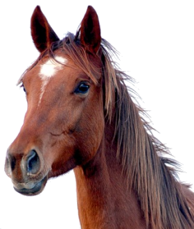 Horse Png Image Free Download Picture Horses Free Horses Stock Images Free