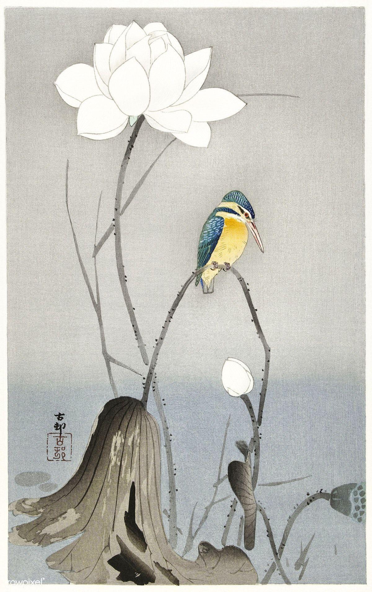 Kingfisher with Lotus Flower (1900 - 1945) by Ohara Koson (1877-1945). Original from the Rijks Museum. Digitally… | Flower art painting, Lotus art, Lotus flower art