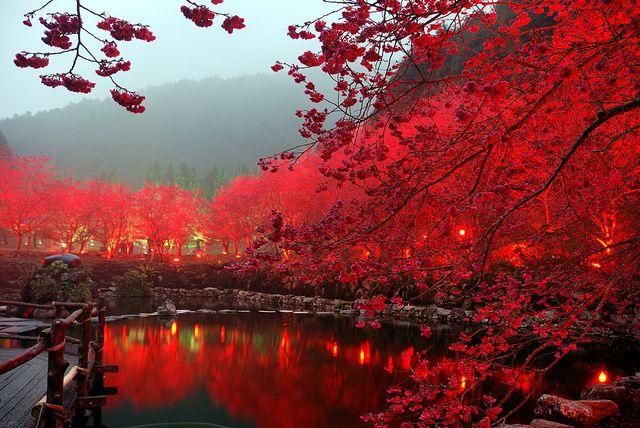 Untitled Japan Photo Japan Beautiful Places