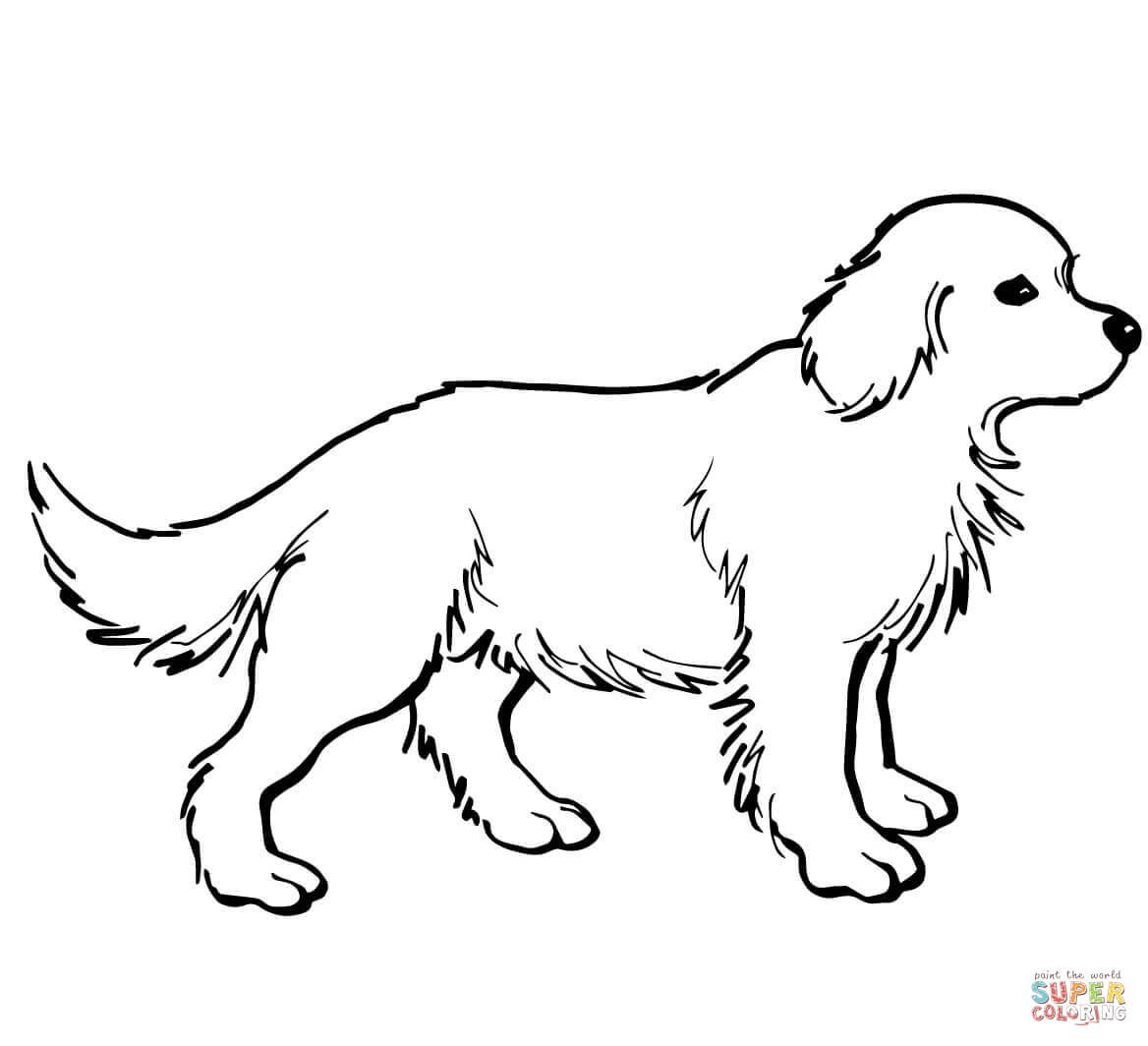 27 Amazing Picture Of Golden Retriever Coloring Page Albanysinsanity Com In 2020 Dog Coloring Page Dog Pictures To Color Puppy Coloring Pages