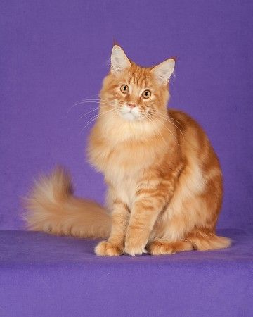 This looks exactlyyy like my kitty, Mufasa
