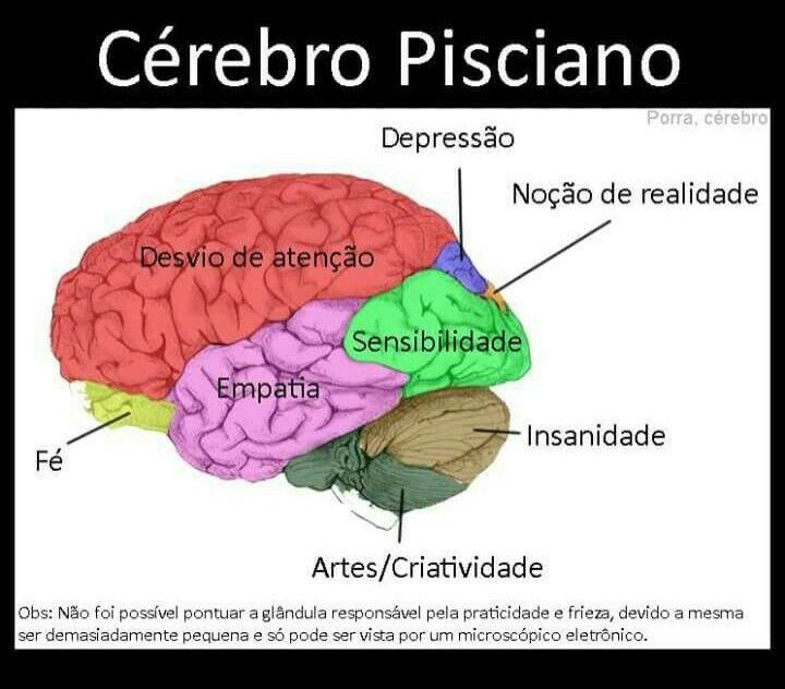 Cerebro Pisciano