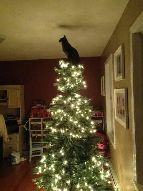 Povero albero di Natale, il gatto domina!!