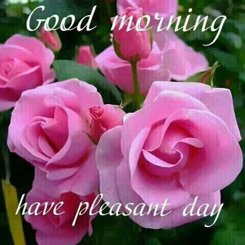 Good Morning Have A Pleasant Day morning good morning morning ...