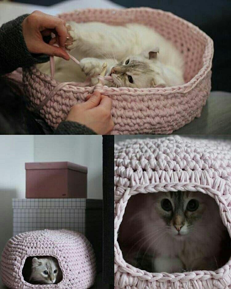 Pin de Xiomara Lombana en gatos | Pinterest | Gato