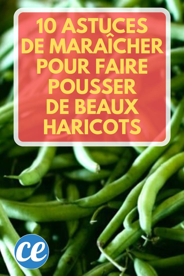 10 Astuces De Maraîcher Pour Faire Pousser De Beaux ...