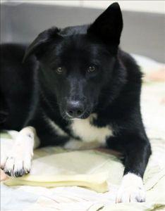 Spca Of Texas Onto Dogs For Adoption Meet Kona Adopt Dallas