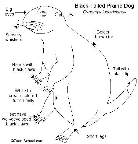 Grasslands Prairie Dog Maze Fun Worksheets Earth From Space Dogs