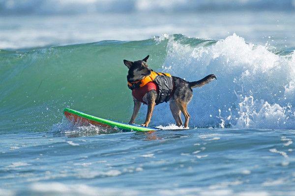 Ruffwear- what every SUP dog needs.