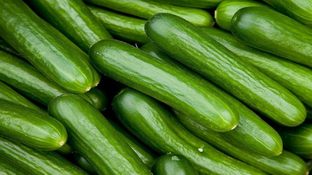 How To Start Cucumber Farming In Nigeria And Make Millions