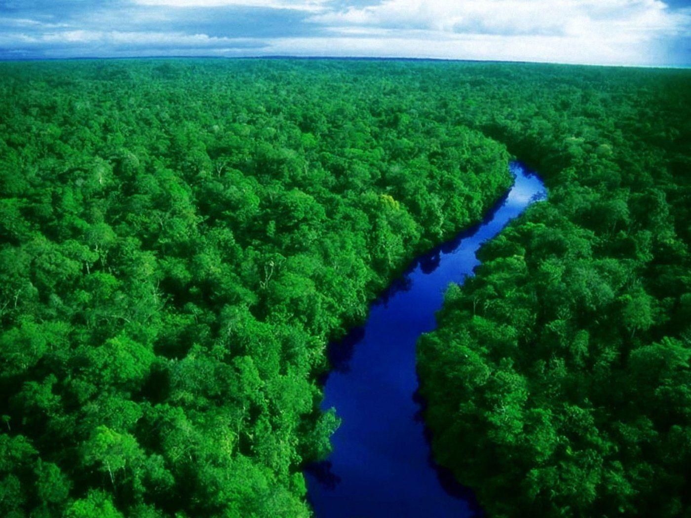 Amazon Forest Brazil Amazon Rainforest Amazon Forest Rainforest
