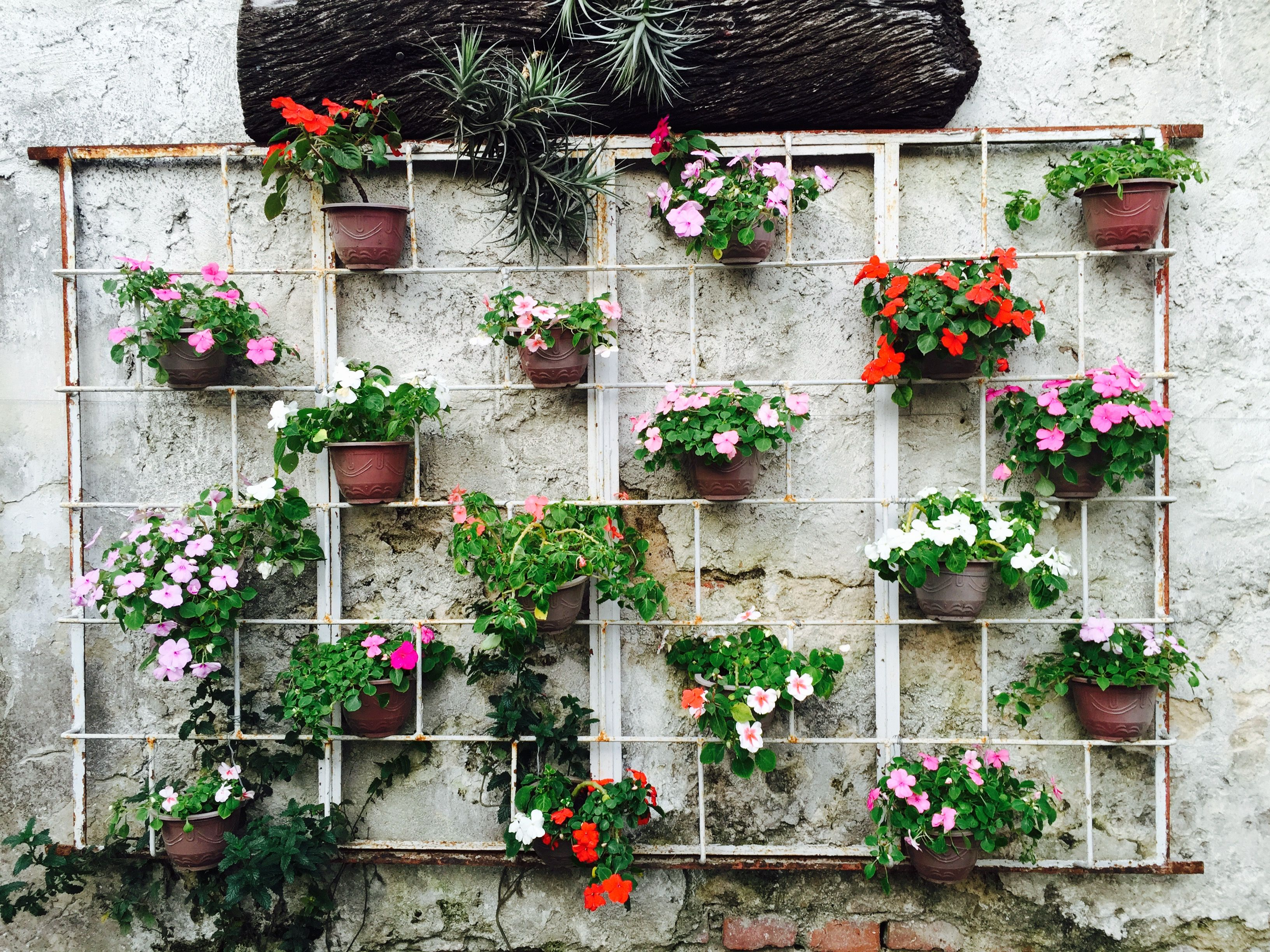 Ventana vieja reutilizada para colgar macetas con alegr as plantas plantas macetas y - Macetas en la pared ...