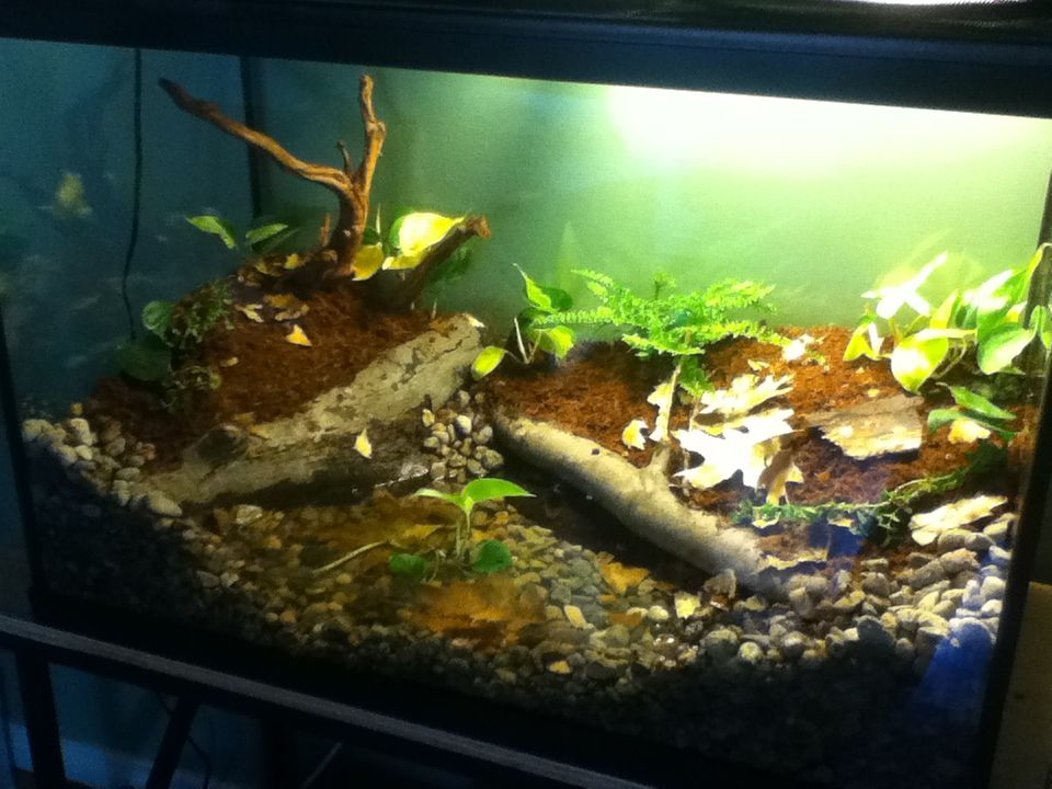 spotted salamander tank - Google Search - 14 Best HFHC Terrarium Options Images On Pinterest Terrarium