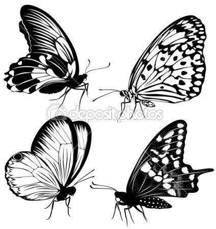 Butterfly Drawings Black And White Google Search Doodling The