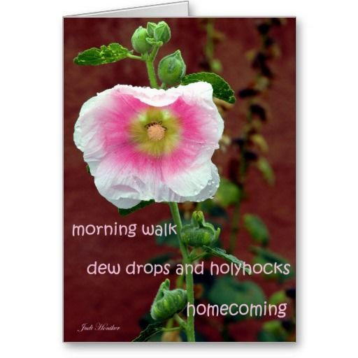 Dew Drops and Hollyhocks Card