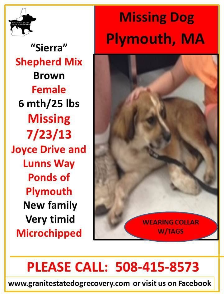 Plymouth Ma Lost Female Shepherd Mix Https Www Facebook Com Granitestatedogrecovery Posts 587291964660324 0 Losing A Dog Find Pets Shepherd