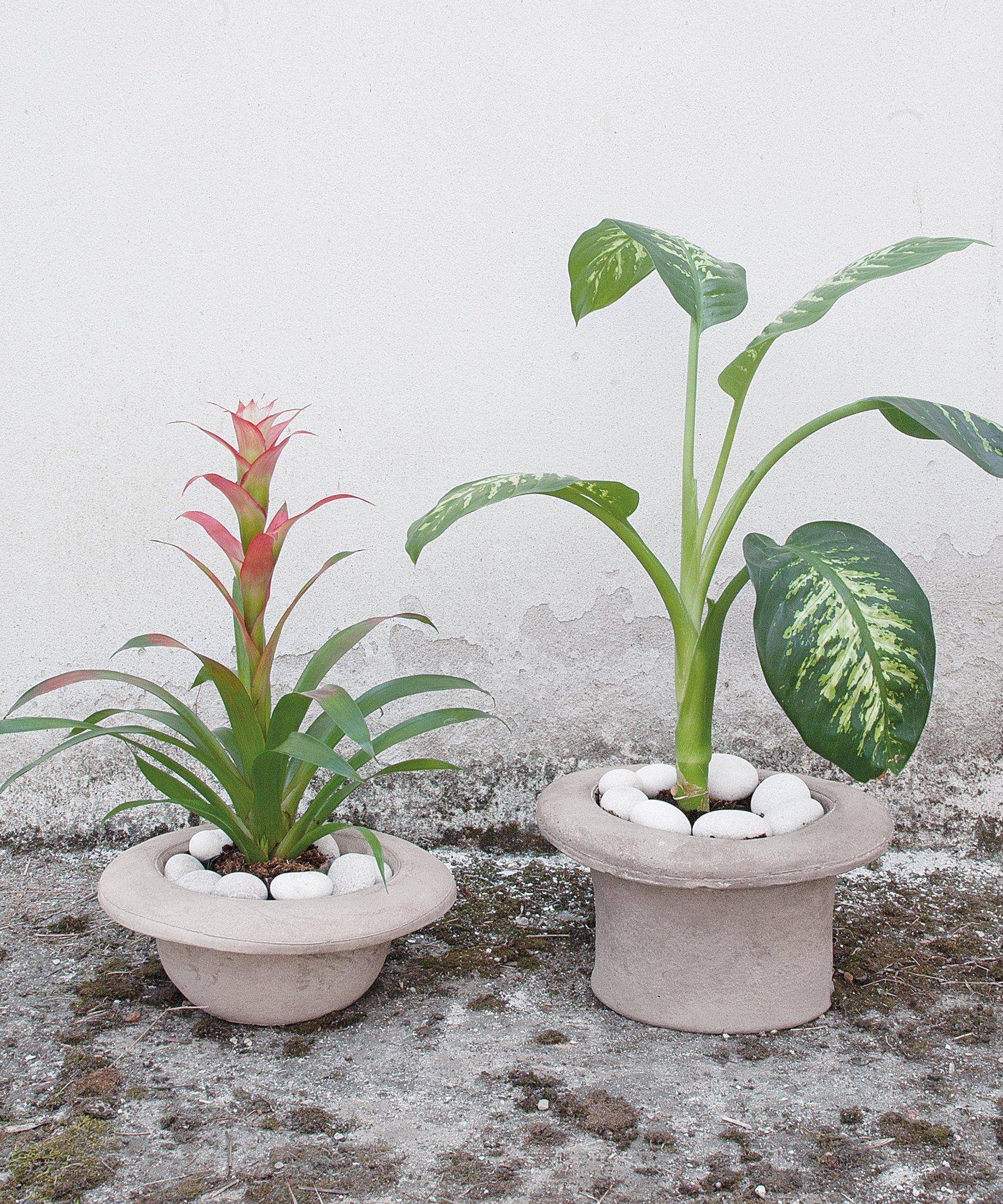 Chapeau bombetta cement vase cement vase plants vase