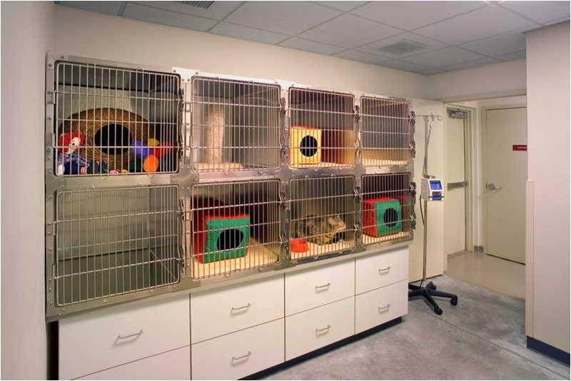 Separate cat cages Pet clinic