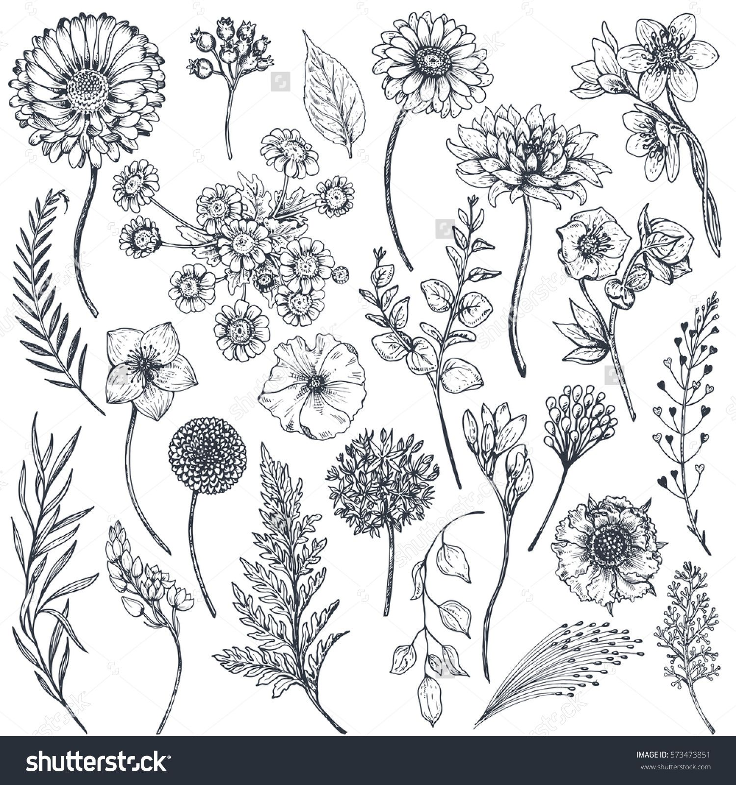 Collection of hand drawn flowers and plants. Monochrome vector ...