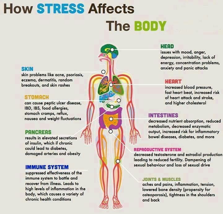 How stress effects the body.