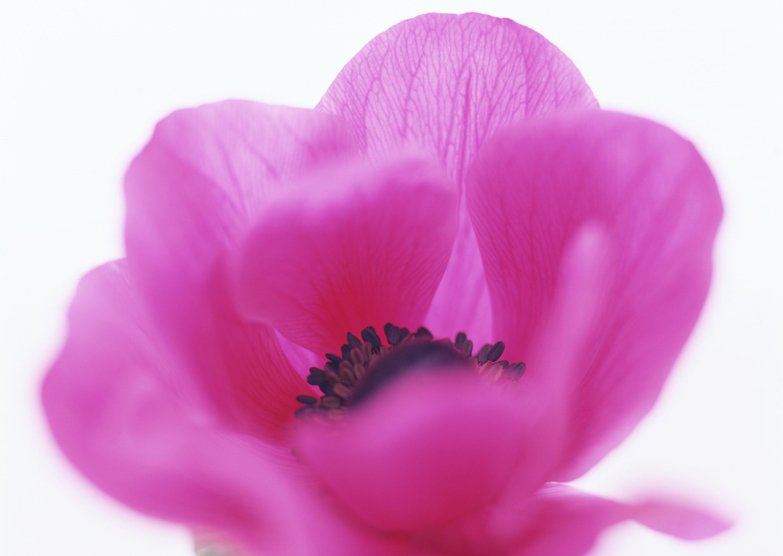 Pin af Yuliya Osyka på Photo Blomster