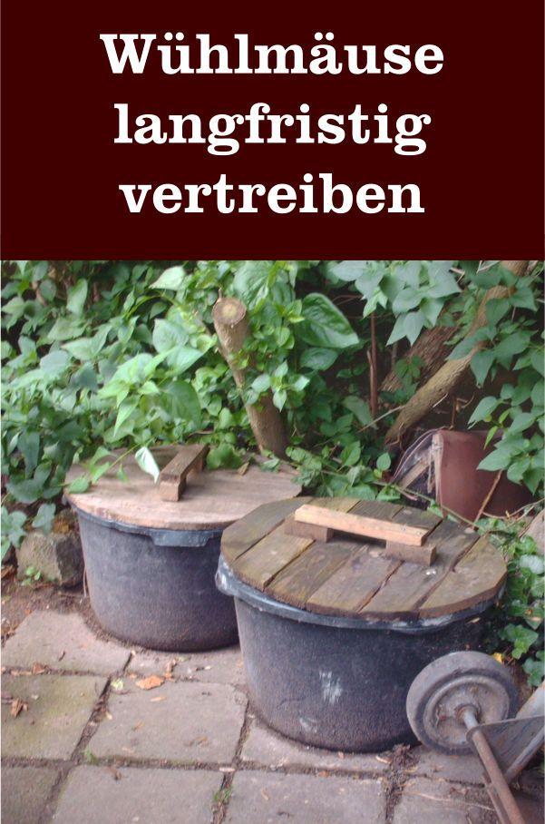 Wie Kann Man Wuhlmause Langfristig Vertreiben Gartenbob De Der Garten Ratgeber Garten Und Outdoor Garten Upcycling Garten