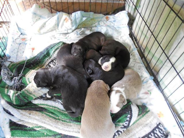 More of Diggers puppies