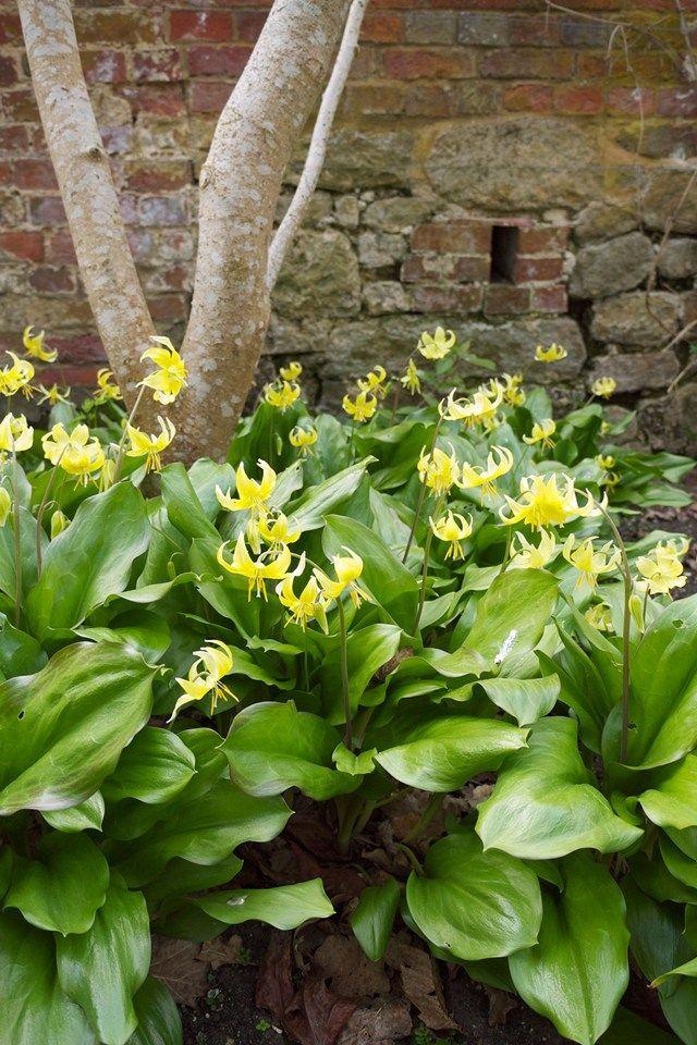 Gardening leave | Heaven is a Garden | Pinterest | Magnolia trees ...