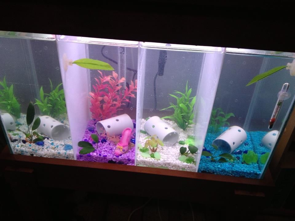 Saw This Online And Thought I Could Do Something Like To Divide A Tank Keep Multiple Betta Fish Safe In The Same