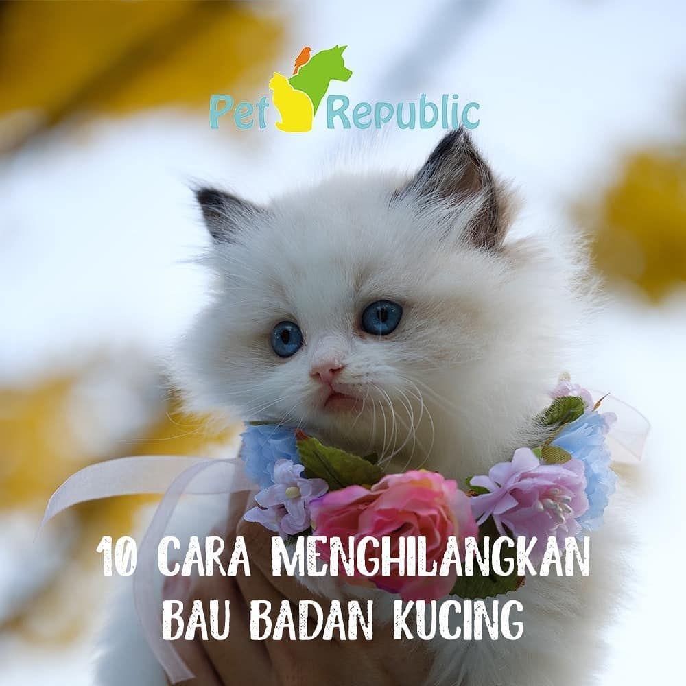 Memiliki Kucing Sebagai Hewan Peliharaan Di Rumah Bisa Membuat Mood Kita Naik Kucing Merupakan Teman Yang Menyenangkan Animals Catwoman Cats