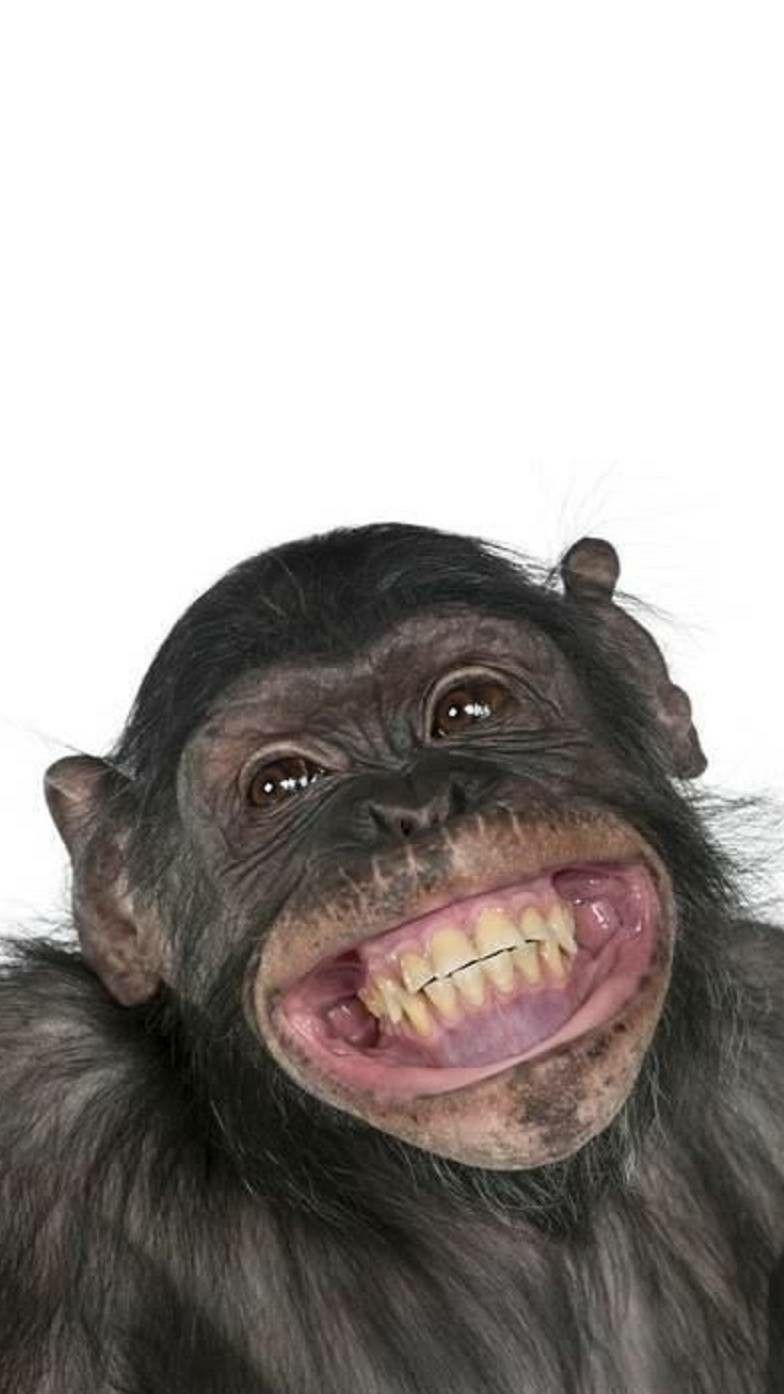 """Comedy Card for those who love a Selfie! Birthday Card /""""Cheeky Monkey Selfie/"""""""
