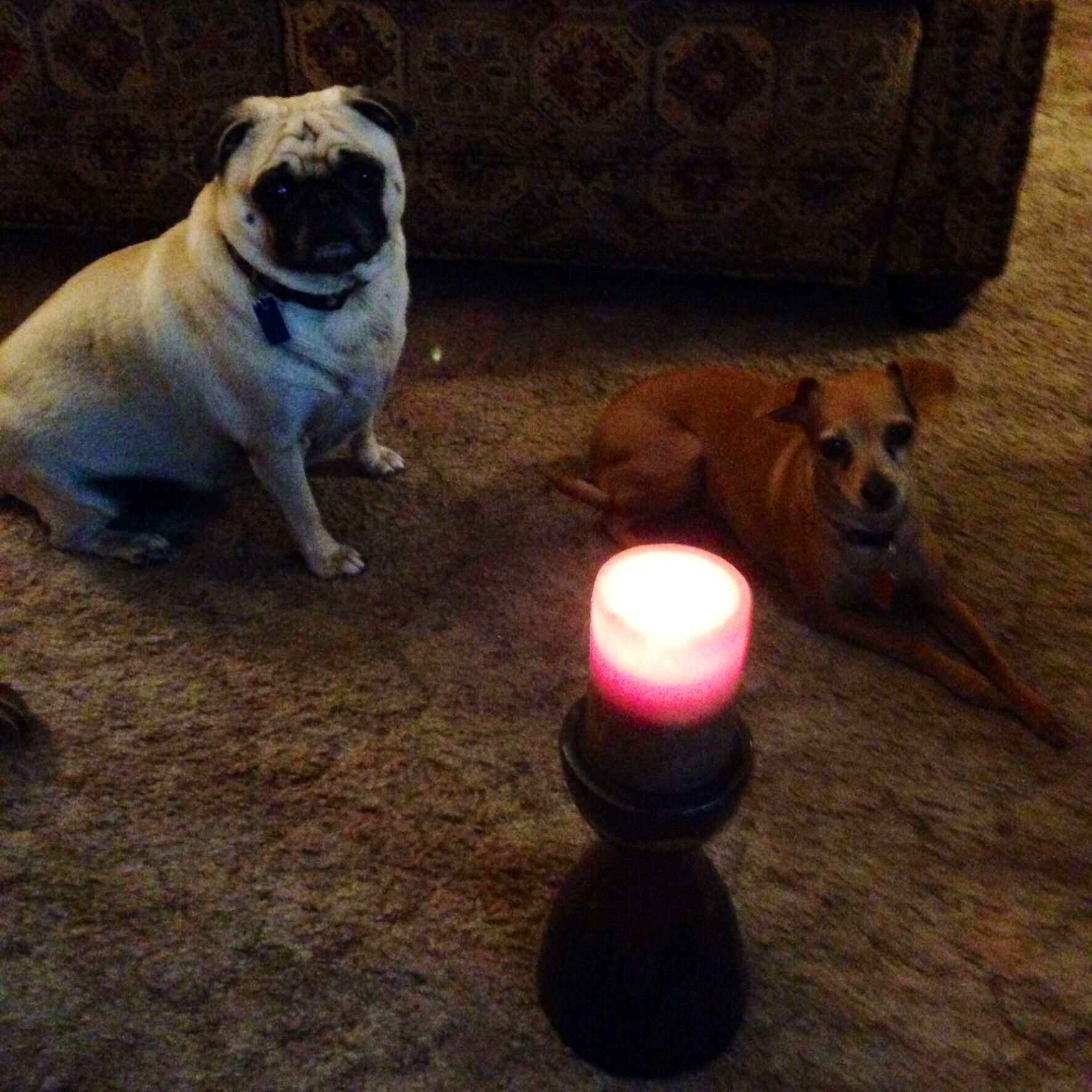 A candle for Brody from Darcy and Dolly!