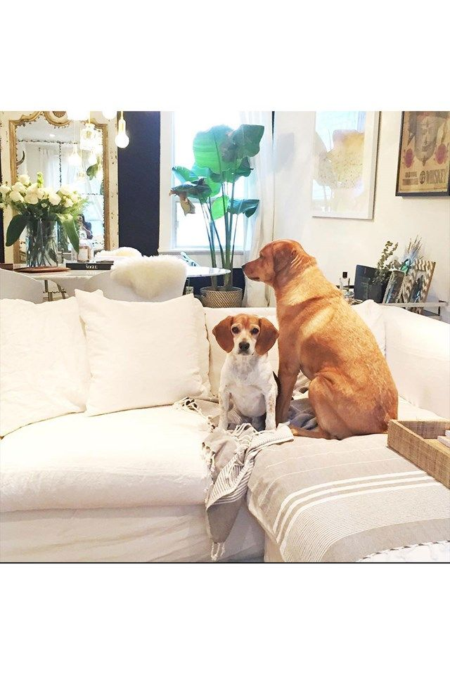 Meghan Markle's Chic Toronto Home. The actress & girlfriend of Prince Harry favours Scandinavian-chic in her Toronto home  - interiors news on HOUSE by House & Garden