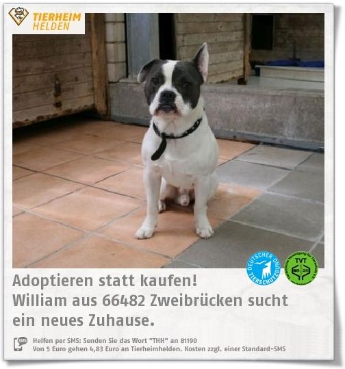 Pin Von Tierheimhelden On Pinterest Auf Tiere Aus Dem Tierheim Tierheim Franzosische Bulldogge Mix Und Bulldogge
