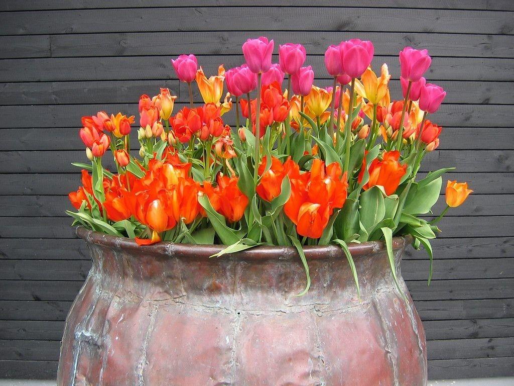 Pin On Fantastic Florals Fantastic flower vase wallpaper images