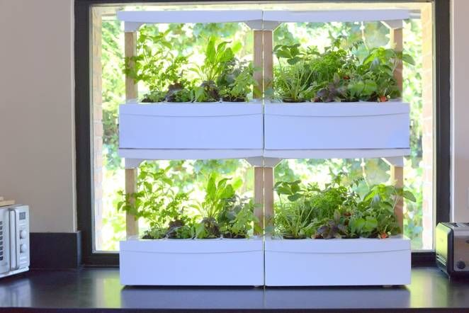 Fresh Square Countertop Growing Units Offer Easy Indoor 400 x 300