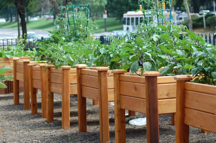 Gronomics Elevated Garden Beds Info Here On Type Of Wood