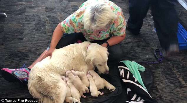 A Service Dog Named Ellie Which Is Short For Eleanor Rigby Went