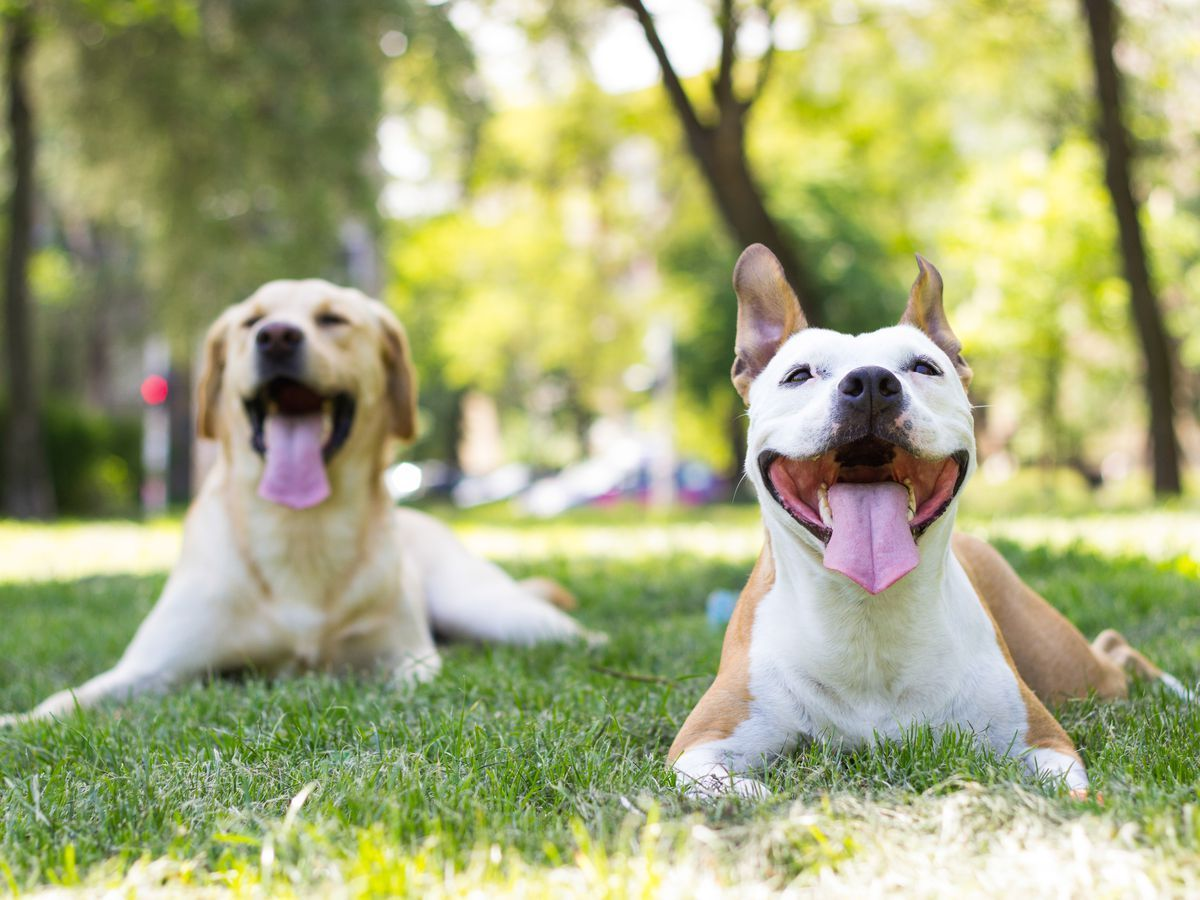 14 Best Dog Parks In Chicago Dog Interactions Dogs Best Dogs
