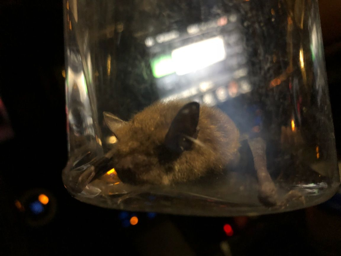 We did a late night bat call in Guelph a few days ago