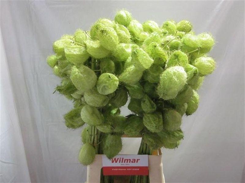 Пин на доске цветы и зелень для свадебного букета