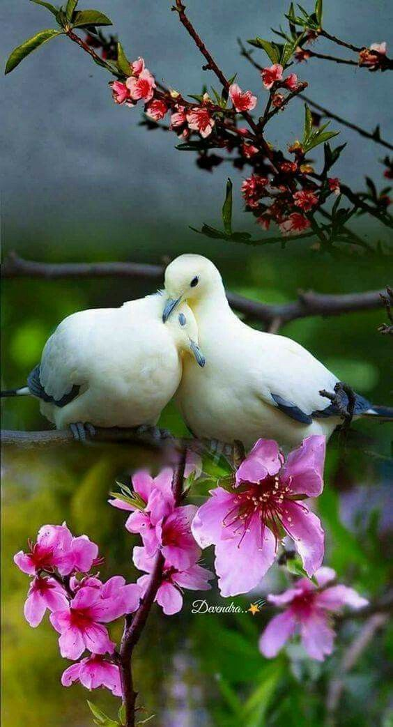 Pin by sathyamoorthy hebbar on morning quotes   Birds ...