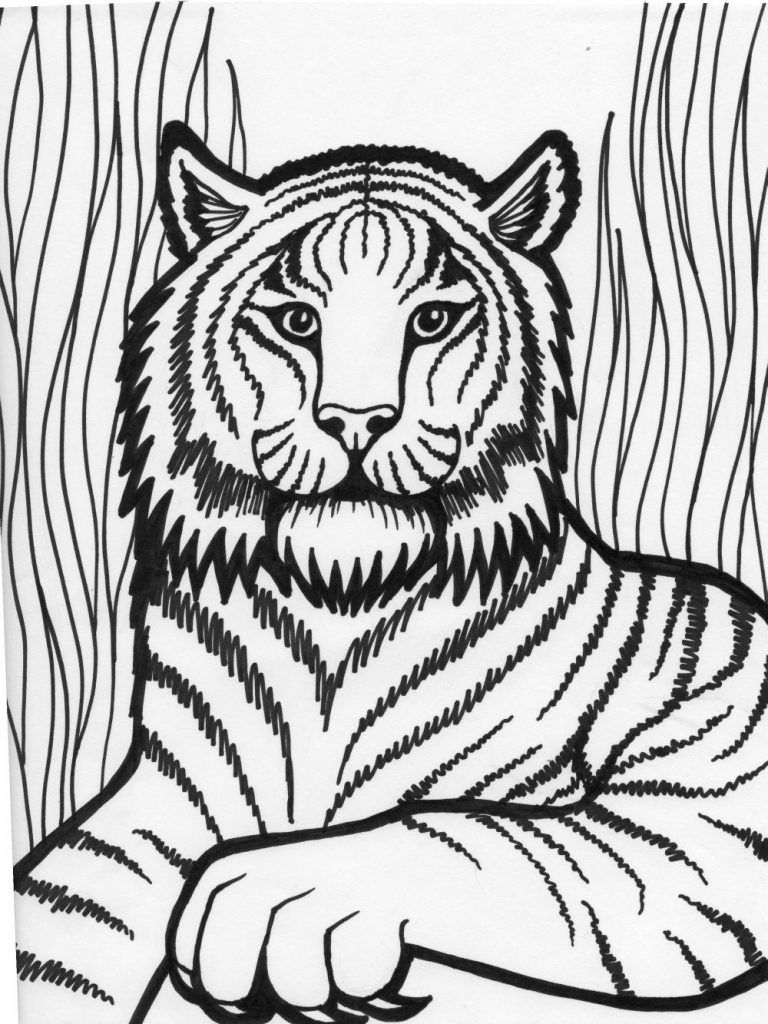 Cool Tiger Black And White Lion Coloring Pages Animal Coloring
