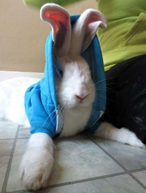 Animals wearing hoodies (19 Photos)