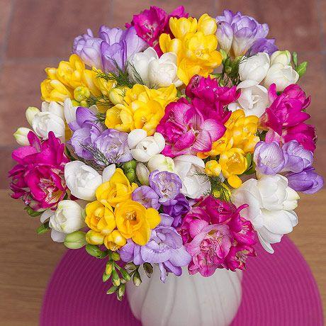 Free UK Postage Bulbs 10 x Freesias Mixed Colours