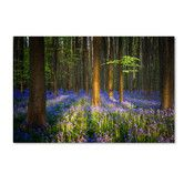 Found it at Wayfair - 'Mystical Forest' by Mathieu Rivrin Photographic Print on Wrapped Canvas