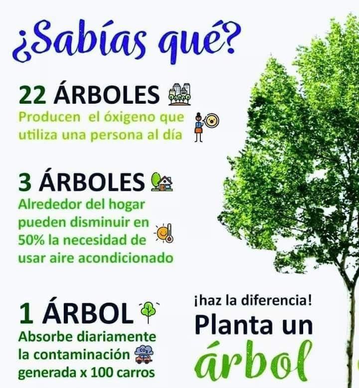 Plantemos Un árbol Cuidado De La Naturaleza Salud Y Medio Ambiente Frases De Agricultura