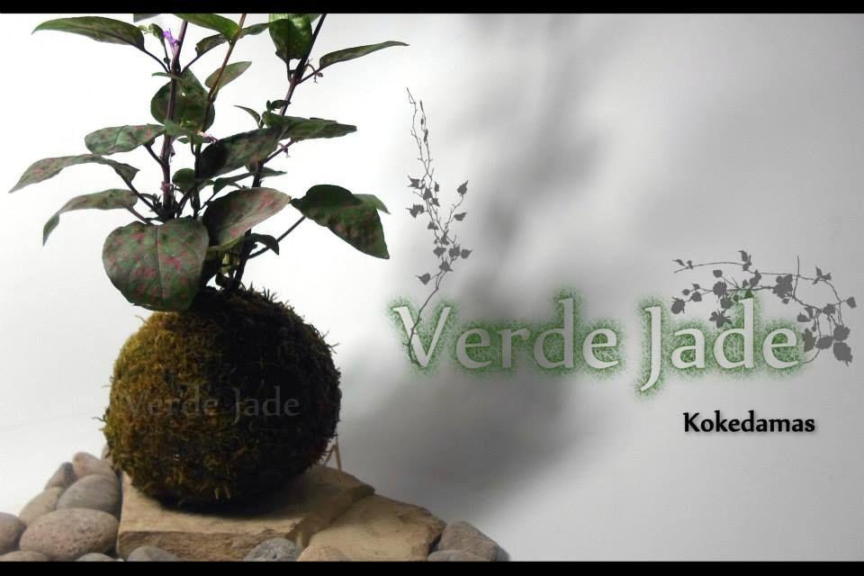 Kokedama Paleta de Pintor Base de Laja Consultas: eve@verdejade.com www.VerdeJade.com Facebook: https://www.facebook.com/TerrariosVerdeJade