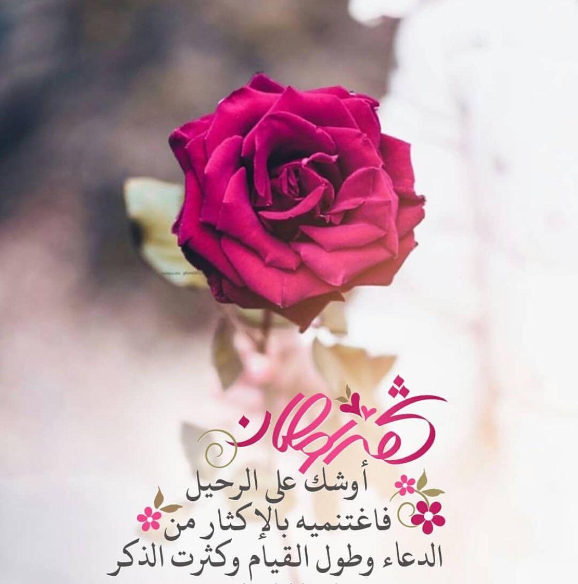 Pin By صورة و كلمة On رمضان كريم Ramadan Kareem Ramadan Flowers Ramadan Mubarak