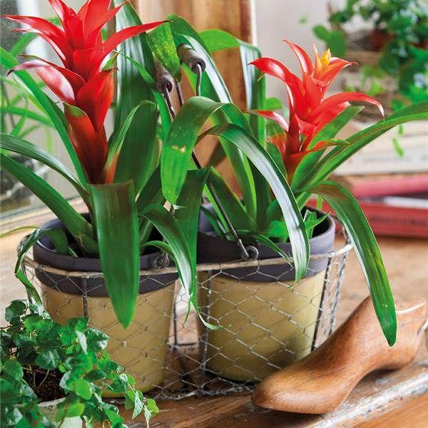 Decora Con Plantas Y Gana Color Sin Flores Plantas De Interior - Plantas-de-jardin-con-flores